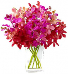 online orchids to philippines