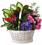 Send mothers day plants to Philippines