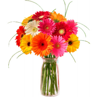 send 12 gerberas to philippines