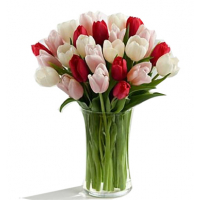 send 12 mix color tulips