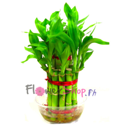 send good luck bamboo plants to philippines