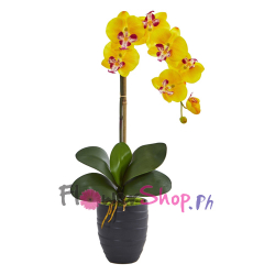 send phalaenopsis yellow orchids plants to philippines