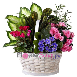 send mixed indoor green plants basket to philippines