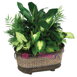 send green planter in basket to philippines