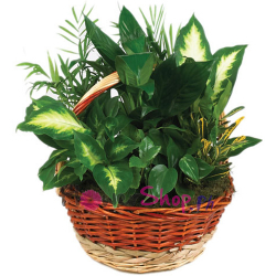 send full green garden basket to philippines