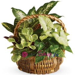 send emerald garden basket to philippines