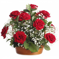 12 Red Roses In a Basket