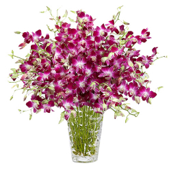 20 Purple Stems Orchids in Vase Send To Philippines