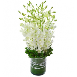 White Orchids send to Philippines
