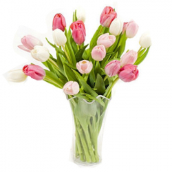 12 pink and white tulips send to philippines