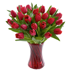 send 12 red tulips to philippines